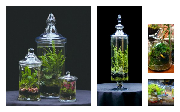 Exceptional Terrariums